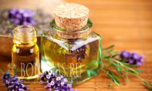 Лавандовое масло начнут производить в Добриче