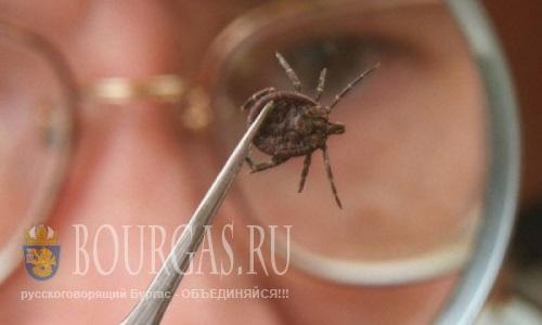 Клещи в Болгарии атакуют отдыхающих