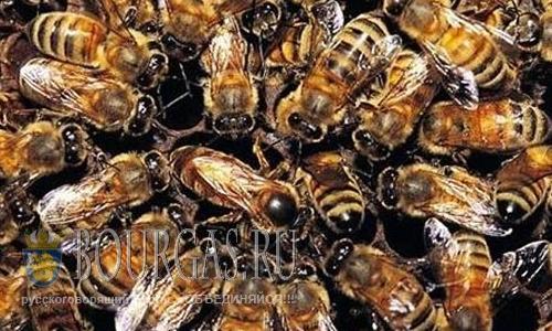 Смертность пчел в Болгарии сегодня составляет более 50%