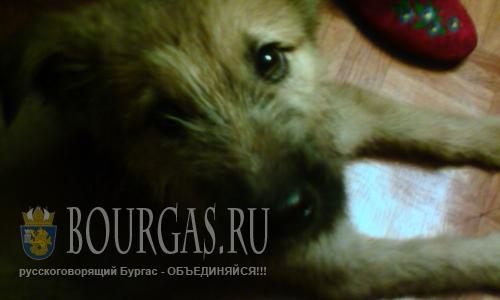В Болгарии постоянно проживает более 25 000 бездомных собак