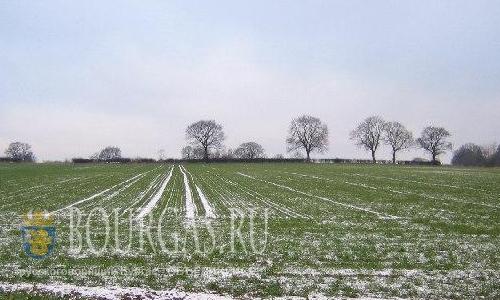 В Болгарии 60% пахотных земель отведено под зерновые