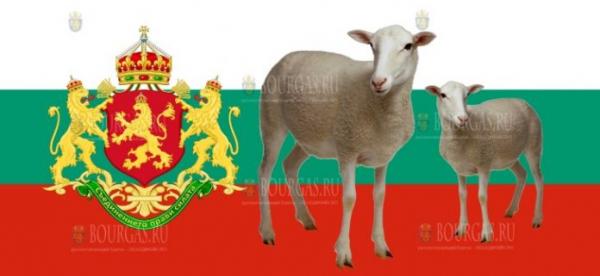 Поголовье овец в Болгарии резко сократилось за последние годы