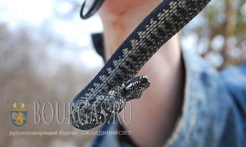 Змея в Варне убила домашнего питомца