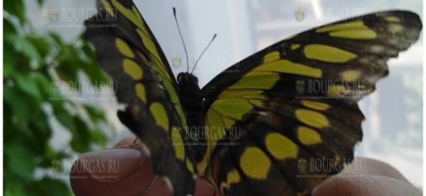 В Бургасе пройдет выставка экзотических бабочек и африканских улиток