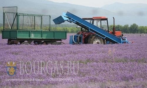 В Болгарии сегодня хранится на складах тонны лавандового масла