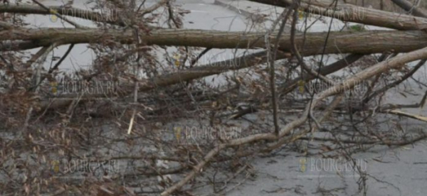 В центре Бургаса сегодня рухнуло дерево