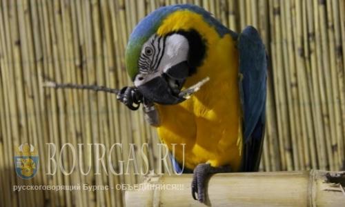 Выставка экзотических птиц открылась в Варне