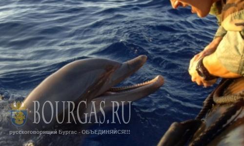 Мертвых дельфинов на болгарском побережье меньше не становится